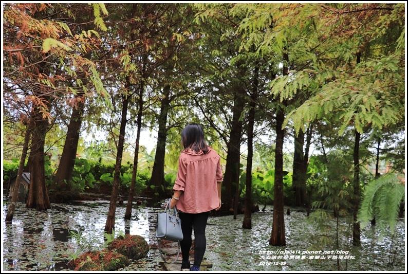 南華山下路落羽松林-2018-12-34.jpg