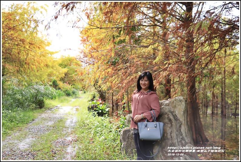 南華山下路落羽松林-2018-12-45.jpg