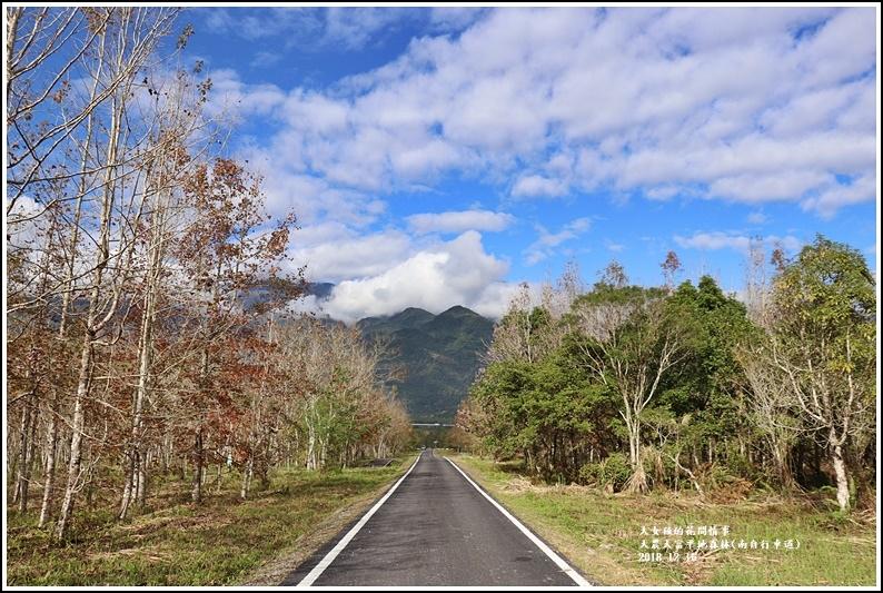 大農大富平地森林-2018-12-11.jpg