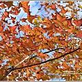 大農大富平地森林-2018-12-23.jpg