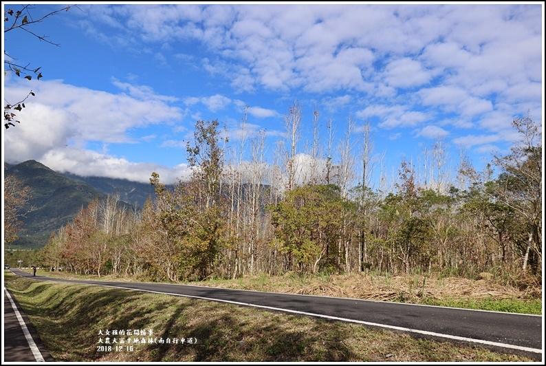 大農大富平地森林-2018-12-25.jpg