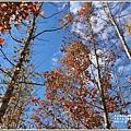 大農大富平地森林-2018-12-32.jpg