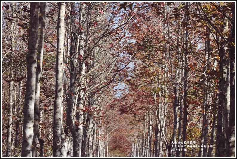 大農大富平地森林-2018-12-43.jpg