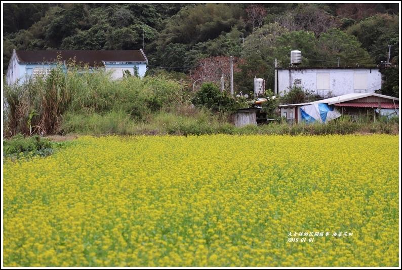 油菜花田-2019-01-06.jpg
