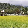 油菜花田-2019-01-05.jpg