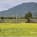 油菜花田-2019-01-08.jpg