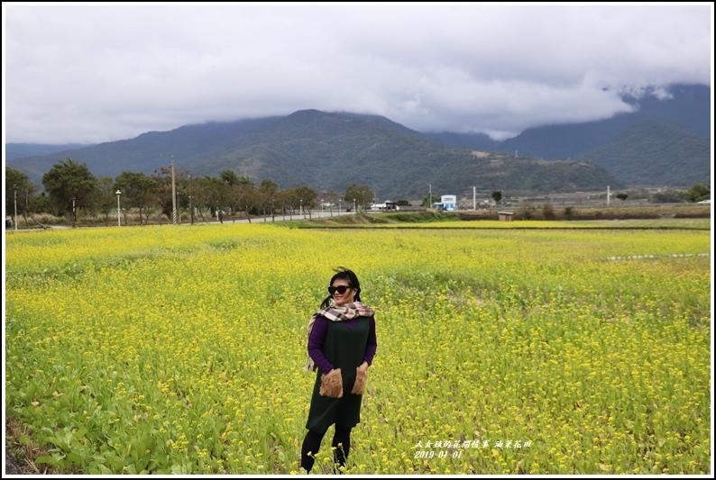 油菜花田-2019-01-11.jpg