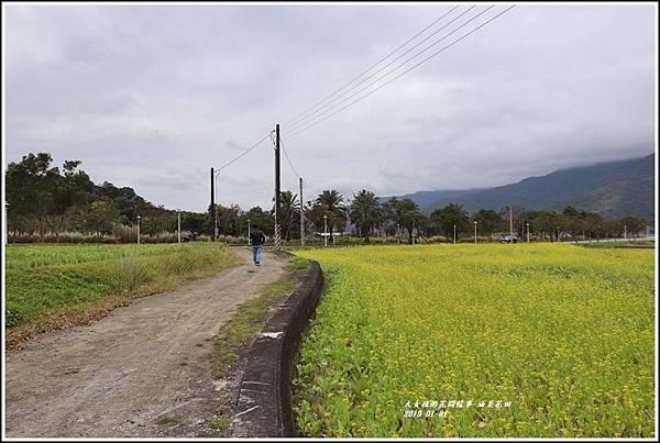 油菜花田-2019-01-13.jpg