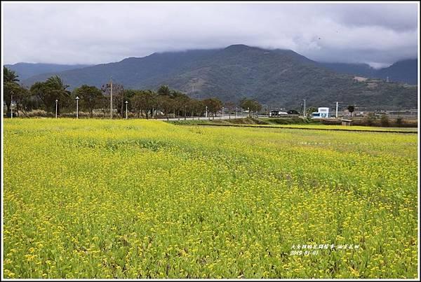 油菜花田-2019-01-14.jpg
