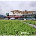 富里鄉農會花海-2019-01-05.jpg