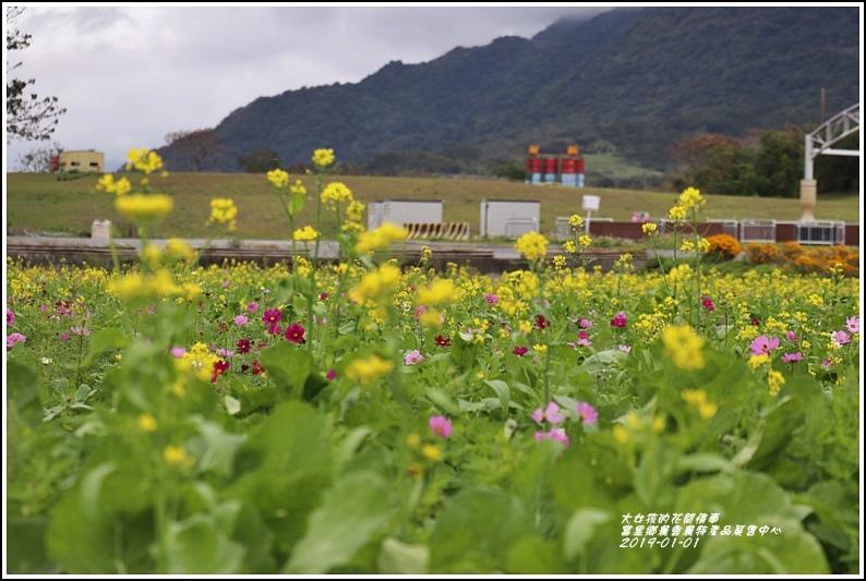 富里鄉農會花海-2019-01-07.jpg
