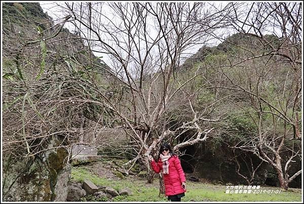 羅山瀑布梅園-2019-01-01.jpg