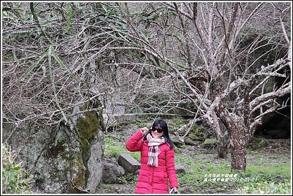 羅山瀑布梅園-2019-01-02.jpg