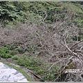 羅山瀑布梅園-2019-01-04.jpg