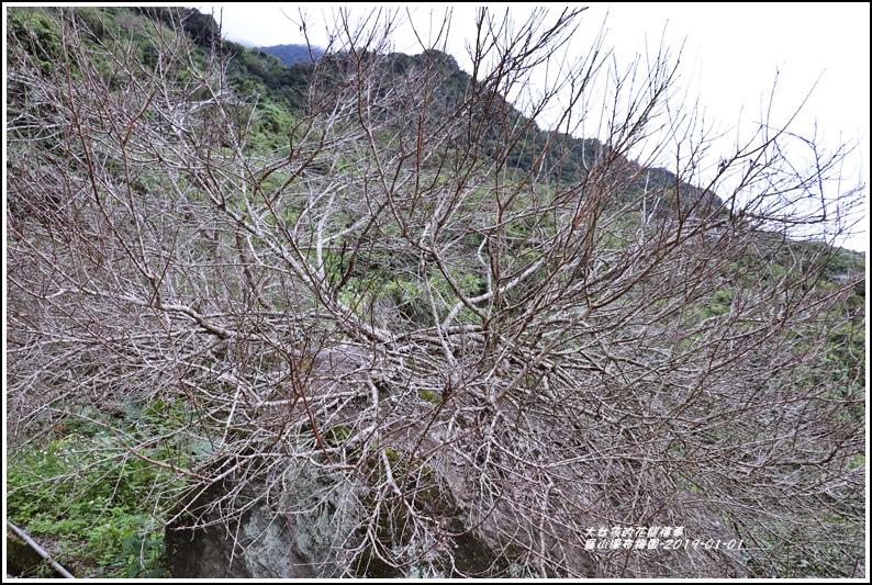 羅山瀑布梅園-2019-01-05.jpg