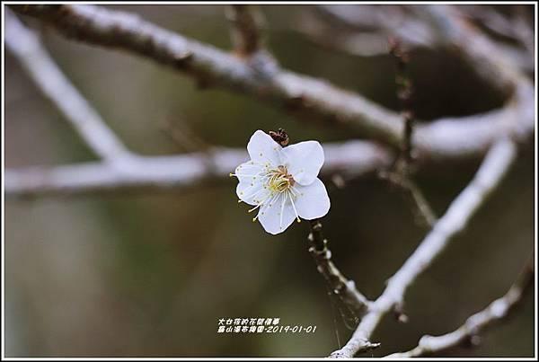 羅山瀑布梅園-2019-01-06.jpg