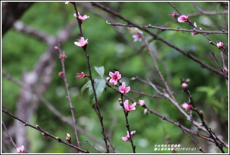 羅山瀑布梅園-2019-01-12.jpg