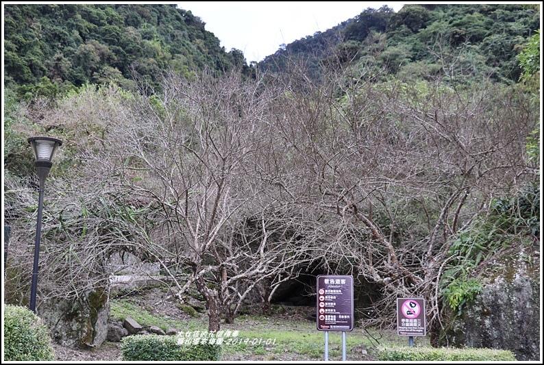 羅山瀑布梅園-2019-01-11.jpg