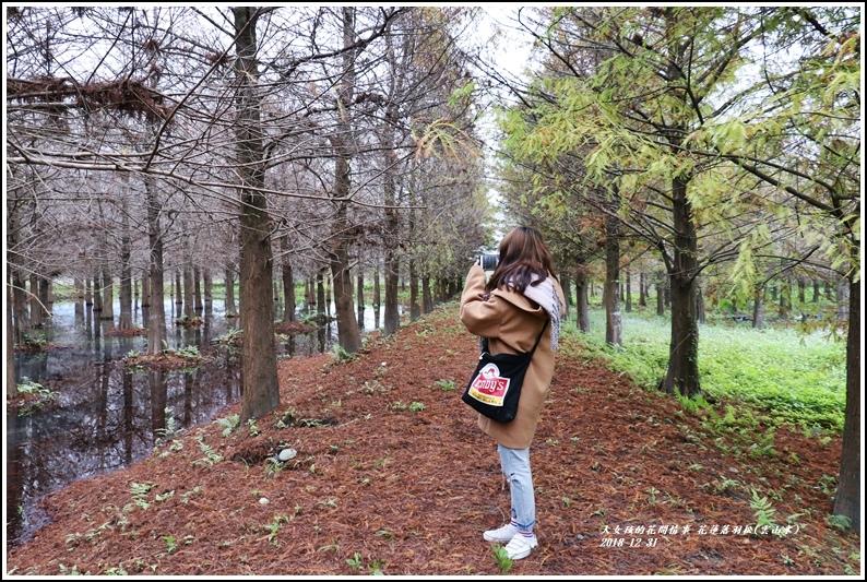 花蓮落羽松(雲山水)-2018-12-04.jpg