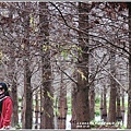 花蓮落羽松(雲山水)-2018-12-16.jpg