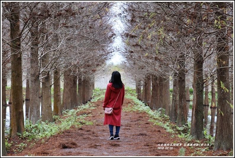 花蓮落羽松(雲山水)-2018-12-22.jpg
