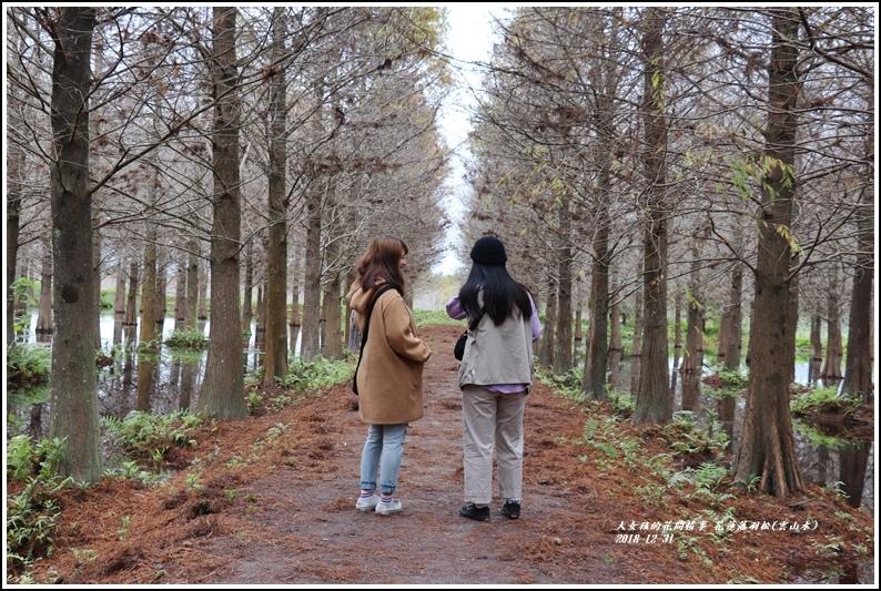 花蓮落羽松(雲山水)-2018-12-28.jpg