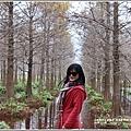 花蓮落羽松(雲山水)-2018-12-29.jpg