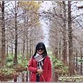 花蓮落羽松(雲山水)-2018-12-30.jpg