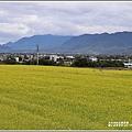 關山油菜花田-2019-01-01.jpg