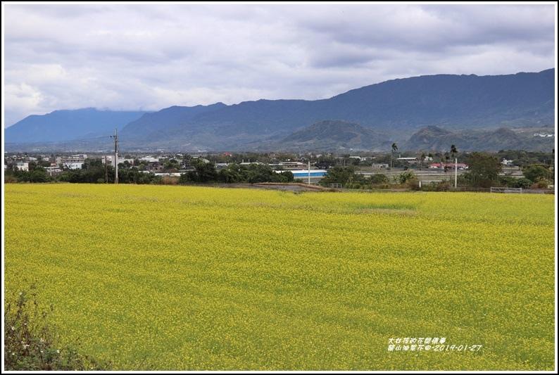 關山油菜花田-2019-01-05.jpg