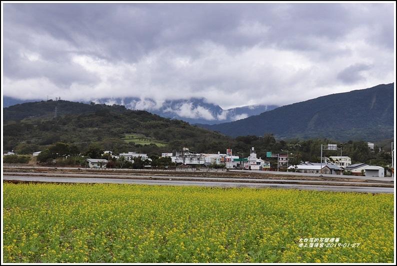 池上福德宮油菜花田-2019-01-05.jpg
