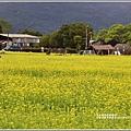 大農大富平地森林-2019-02-06.jpg