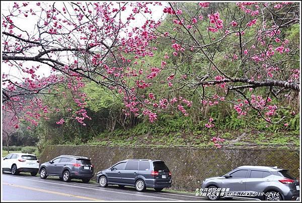台7線丙三星櫻花-2019-02-27.jpg
