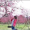 大同崙埤河濱櫻花公園-2019-02-03.jpg