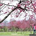 大同崙埤河濱櫻花公園-2019-02-06.jpg