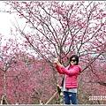 大同崙埤河濱櫻花公園-2019-02-08.jpg