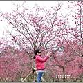 大同崙埤河濱櫻花公園-2019-02-07.jpg