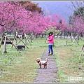 大同崙埤河濱櫻花公園-2019-02-09.jpg