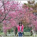 大同崙埤河濱櫻花公園-2019-02-11.jpg
