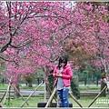 大同崙埤河濱櫻花公園-2019-02-13.jpg