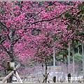 大同崙埤河濱櫻花公園-2019-02-23.jpg