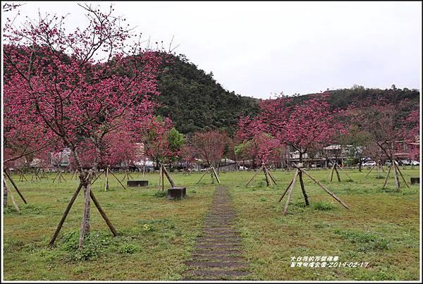 大同崙埤河濱櫻花公園-2019-02-27.jpg