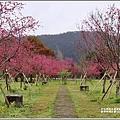 大同崙埤河濱櫻花公園-2019-02-34.jpg