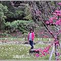 大同崙埤河濱櫻花公園-2019-02-37.jpg