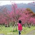 大同崙埤河濱櫻花公園-2019-02-43.jpg