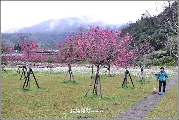 大同崙埤河濱櫻花公園-2019-02-58.jpg