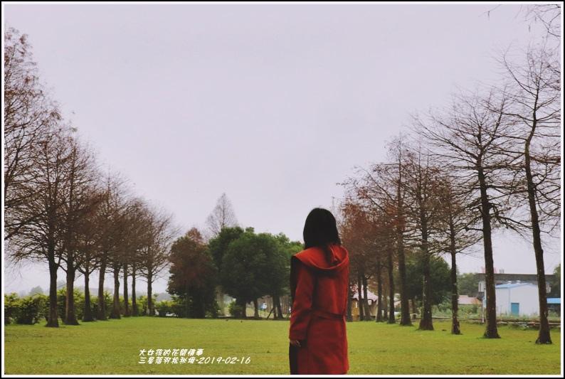 三星落羽松秘境-2019-02-04.jpg