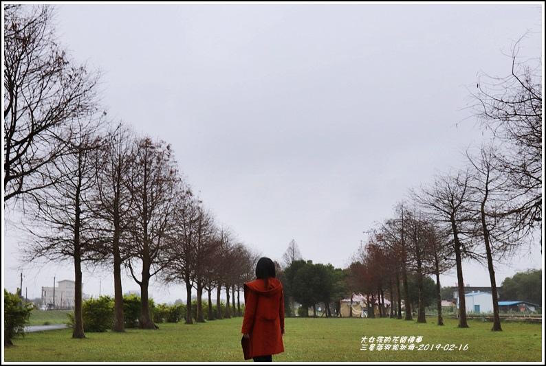 三星落羽松秘境-2019-02-05.jpg