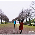 三星落羽松秘境-2019-02-09.jpg