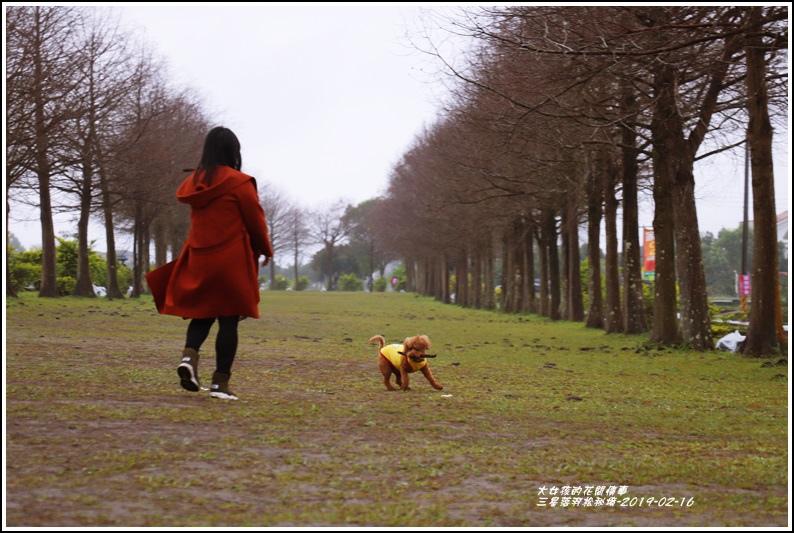 三星落羽松秘境-2019-02-13.jpg